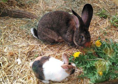 Botanika - Museo botánico de Bremen - Animales - Conejos y liebres