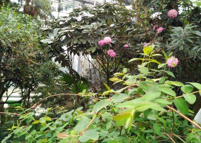 Botanika - Museo botánico de Bremen - Plantas tropicales